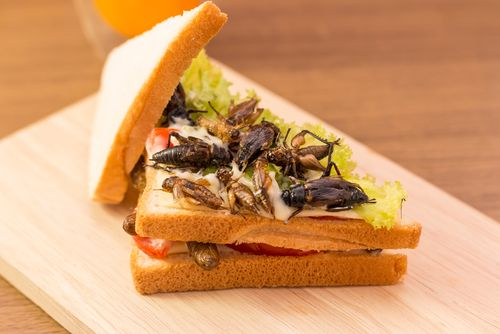 Insect 20sandwich